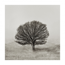 outback-tree