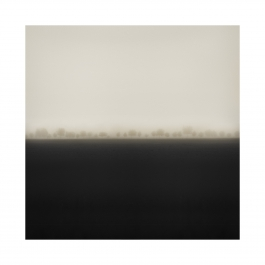 new-trees-in-mist-square